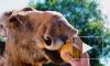 Репортаж из центра Велес: тысячи спасенных диких животных