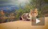 Видео с походными кошками умиляет миллионы пользователей интернета
