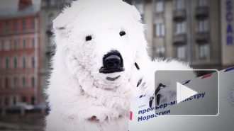 В центре Петербурга утром видели белого медведя