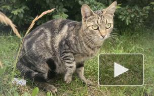 На территории петербургской больницы нашли трупы кошек. Активисты требуют наказать виновных