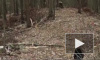 Опубликовано видео с места крушения медицинского вертолета в США