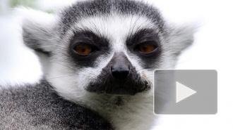 Петербуржцы голосуют за животных и обсуждают новый зоопарк