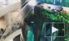 """Видео из Москвы: В ТЦ """"Океания"""" протек знаменитый гигантский аквариум"""