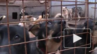 Нескольких собак, едва не сгоревших при пожаре в кемеровском приюте, спас пес Рэм