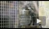 Самцов стало больше. Пополнение в Ленинградском зоопарке