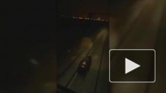 Прокуратура проверит машинистов, которые задавили медведя, видео опубликовано в сети