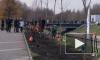 На набережной реки Оккервиль петербуржцы высадили 20 кленов