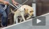 Петербургское метро открыло двери для слепых с собаками-поводырями