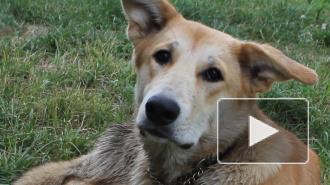 Им нужен дом. Как помочь брошенным животным в Петербурге