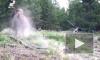 Видео из США: В Йеллоустонском нацпарке бизон напал на 9-летнюю девочку