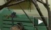 Пензенский зоопарк показал на видео новорожденных двойняшек лемуров