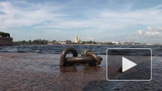 Погода: первая неделя лета в Петербурге будет жаркой