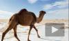Снег в Сахаре: Алжирцы радуются как дети выпавшему снегу