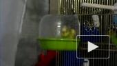 Купание попугая Яшки