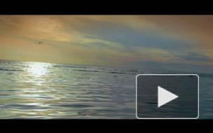 Премьера клипа. ГАРИ (Невский Бит), INS - Не Видел Океана