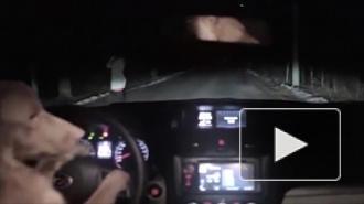 Видео с рыжей собакой, ловко угоняющей машину, покорило интернет