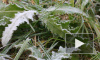 Полтавченко: Снег выпадет неожиданно
