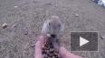 Красноярец прикормил и снял на видео забавных сусликов