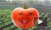 Говорящие овощи про тачки, кражи, забытых детей