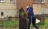 В Таганроге вместо собак во дворе дома выгуливали медведя