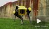 Видео: Boston Dynamics показали своего самого милого робота