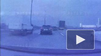 Автомобиль сбил лисенка на КАД: видео