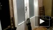 Кот-швейцар