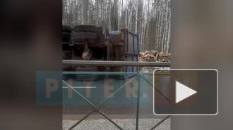 Видео: на Суздальском проспекте мусоровоз завалился набок