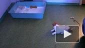 Щенячье-кошачьи радости