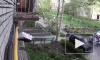 В Петрозаводске дерево упало на женщину