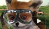 Про Упоротого лиса собираются снять документальный фильм
