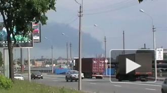 Главный токсиколог Петербурга: дым от пожара в Красном бору опасен для здоровья