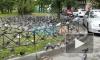 На проспекте Славы голуби оккупировали пешеходную дорожку и часть двора