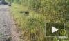 Водитель Lada Granta разбился в Киришском районе Ленобласти