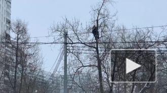 У Бабушкинского суда неизвестный залез на дерево и кричит в мегафон