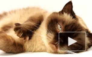 #MrSandmanChallenge: котики, собачки и люди массово танцуют