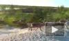 На Ямале рабочие сняли на видео охоту медведя на оленей