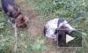 В Хабаровске ищут школьниц, выкладывавших жуткие видео издевательств над животными