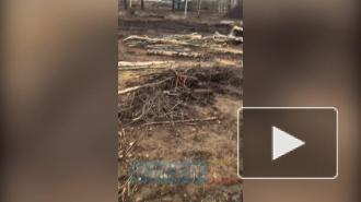Видео: на острове Чухонка нашли боевой снаряд времен ВОВ