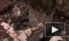 Древний город майя найден археологами в Мексике