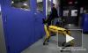 """Возмутительное видео: В BostonDynamics """"издеваются"""" над роботом - собакой"""