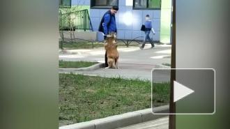 В Петербурге задержали живодера, избившего собак на глазах у прохожих