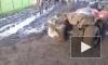 В Австралии коала напала на квадроцикл ради обнимашек и нежности