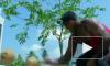 За 47 секунд житель Индии кулаком разбил 124 кокоса
