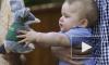 Кейт Миддлтон и принц Уильям посетили Австралию: маленький Джордж пытался схватить за ухо бандикута