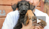 В приюте в Ломоносовском районе сотрудники ищут опекунов для собак
