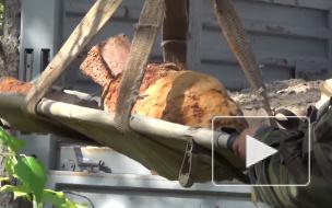 Калейдоскоп городских будней: в Кировском районе нашли бомбу