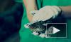 В Ленинградском зоопарке показали кусачую анаконду