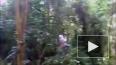 В Южно-Приморском парке сильно травмирована 11-летняя ...