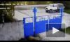 Видео: В Нижегородской области пьяный полицейский насмерть сбил на обочине женщину